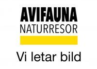 september 2021 Azorerna havsfåglar