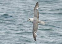 9 - 13 september 2021  Kurs havsfåglar i Skagen, Danmark